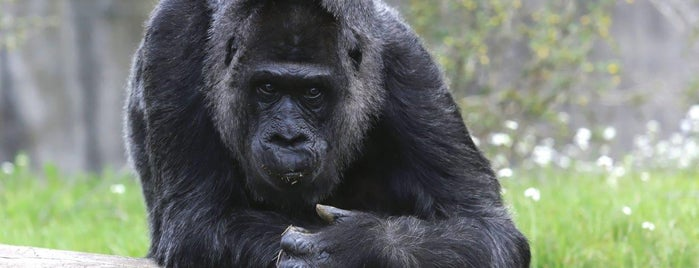 Zoo Berlin is one of Berlin.