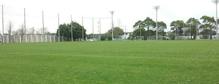 姉崎サッカー場 is one of football.