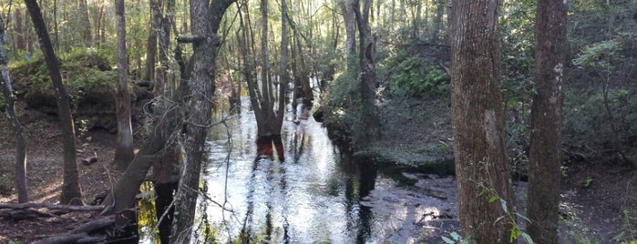 Leon County Geological Sink Park is one of Fun Activities in Tallahassee.