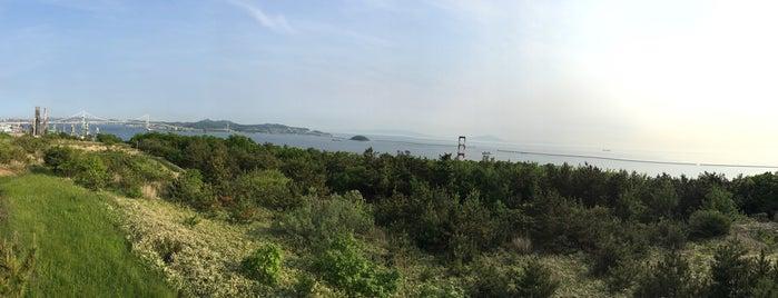 白鳥湾展望台 is one of 地元観光案内.