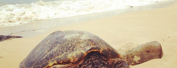 Laniakea (Turtle) Beach is one of Guide to Haleiwa's best spots.