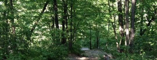 Nichols Arboretum is one of sinister summer.