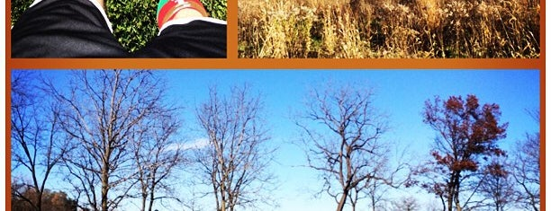 Heron Creek Forest Preserve is one of Favorite Great Outdoors.