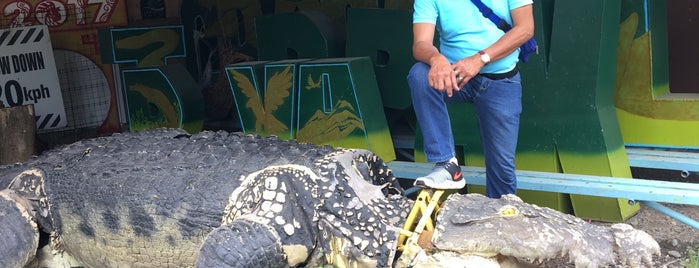 Davao Crocodile Park is one of Places I've been to....