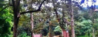 Relau Metropolitan Park Jungle Tracking is one of jane.