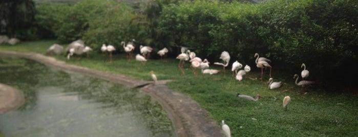Kuala Lumpur Bird Park is one of แวะเที่ยว Kuala Lumpur, Malaysia (3).