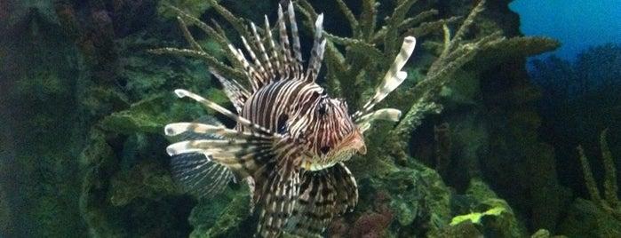 Shark Reef Aquarium is one of Las Vegas.