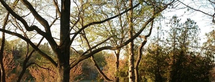 Brookline Reservoir is one of Nearby Neighborhoods: Brookline Village.