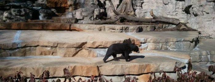 Saint Louis Zoo is one of Best Spots in the St. Louis Metro #visitUS.