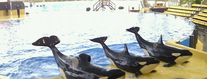 Loro Parque is one of Attractions to Visit.
