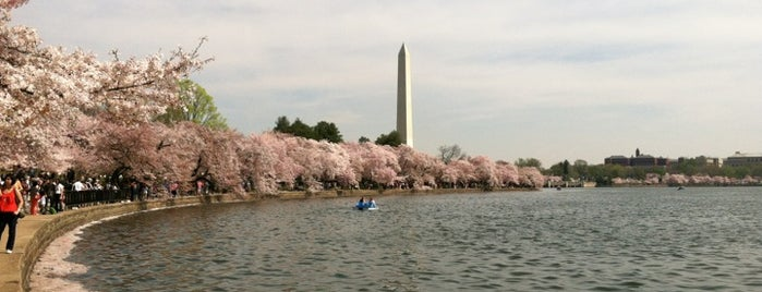 National Cherry Blossom Festival is one of Members.