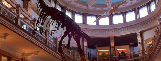 Musée Redpath Museum is one of Favourite Montreal.