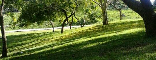 Parque Carlos Alberto de Souza is one of Lugares para conhecer.