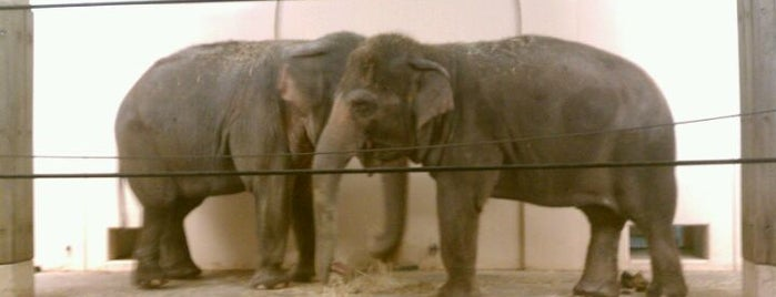 Cincinnati Zoo & Botanical Garden is one of #VisitUS #VisitCincinnati.