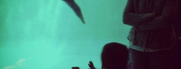 Mystic Aquarium is one of Take a Trip to Mystic, CT..