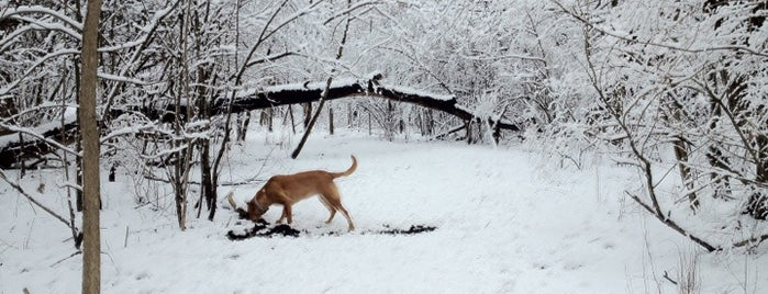 Wauwatosa Dog Park is one of Best places in Muskego.
