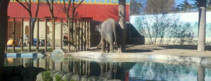 Rosamond Gifford Zoo is one of The Best of Syracuse #visitUS.