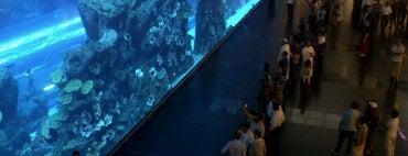 Dubai Aquarium is one of Best places in Dubai, United Arab Emirates.