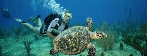 Living The Dream Divers is one of Playing in Grand Cayman.