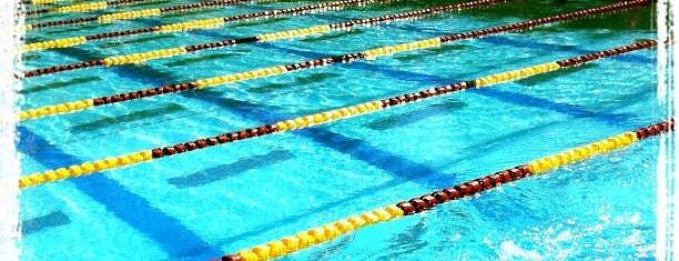 Bay Area Swimming