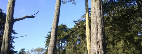Mountain Lake Park is one of Must-Visit Great Outdoors in San Francisco.