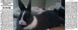 Rabbit Besos is one of Chevalblanc13.