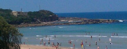 Freshwater Beach is one of Essential Sydney.