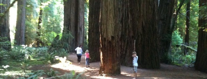 Redwood National Park is one of U.S. National Parks.