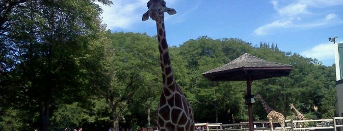 Henry Vilas Zoo is one of Fresh Air Around Madison, WI.