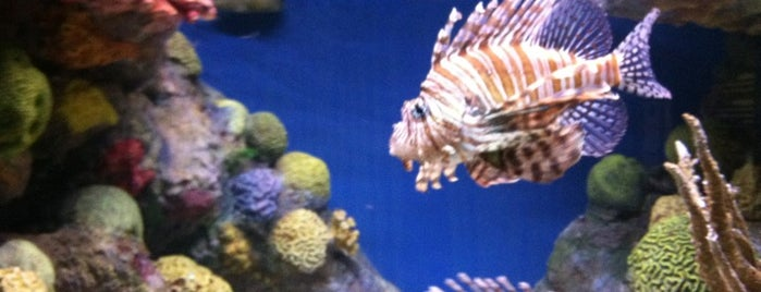 New England Aquarium is one of Aquariums, Museums and Zoos in Boston.