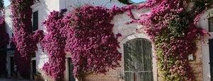 Villa Schinosa is one of Cantine Aperte Puglia 2012.