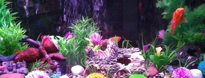 Hobbyist is one of Check PetShops new stock.