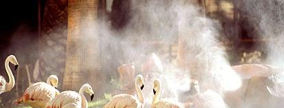 Flamingo Las Vegas Hotel & Casino is one of Las Vegas Outdoors.