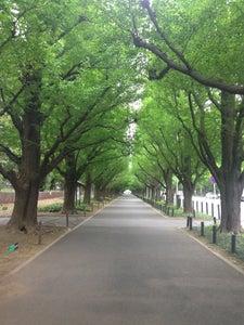 明治神宮外苑 (Meijijingu Gaien)