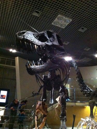 国立科学博物館 (National Museum of Nature and Science)
