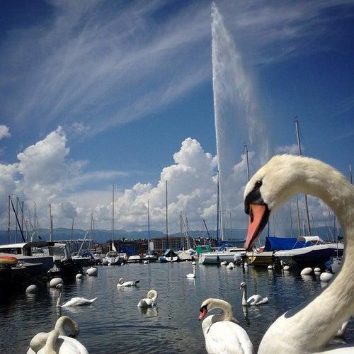 Le Jet d'Eau / Water Fountain