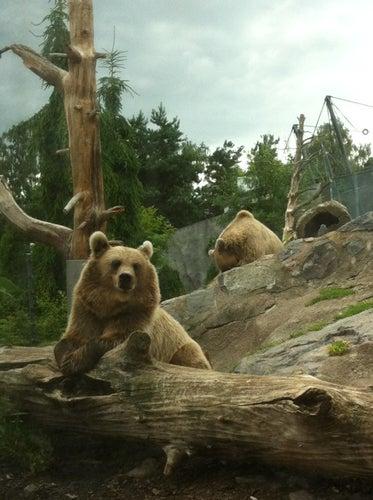 Korkeasaaren eläintarha / Helsinki Zoo
