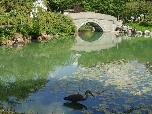 Jardin Botanique de Montréal / Montreal Botanical Garden