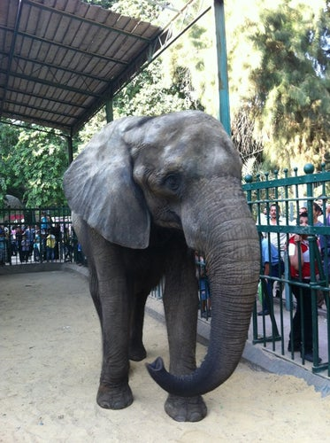 Giza Zoo | حديقة الحيوان
