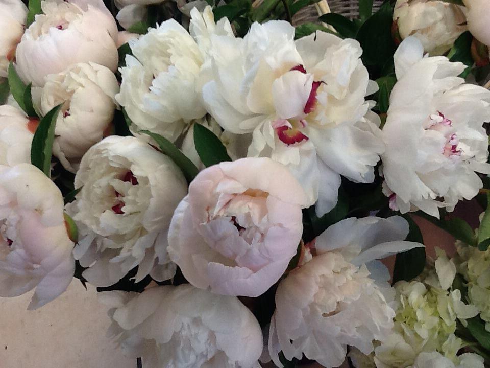 Dailey's Flower Shop,