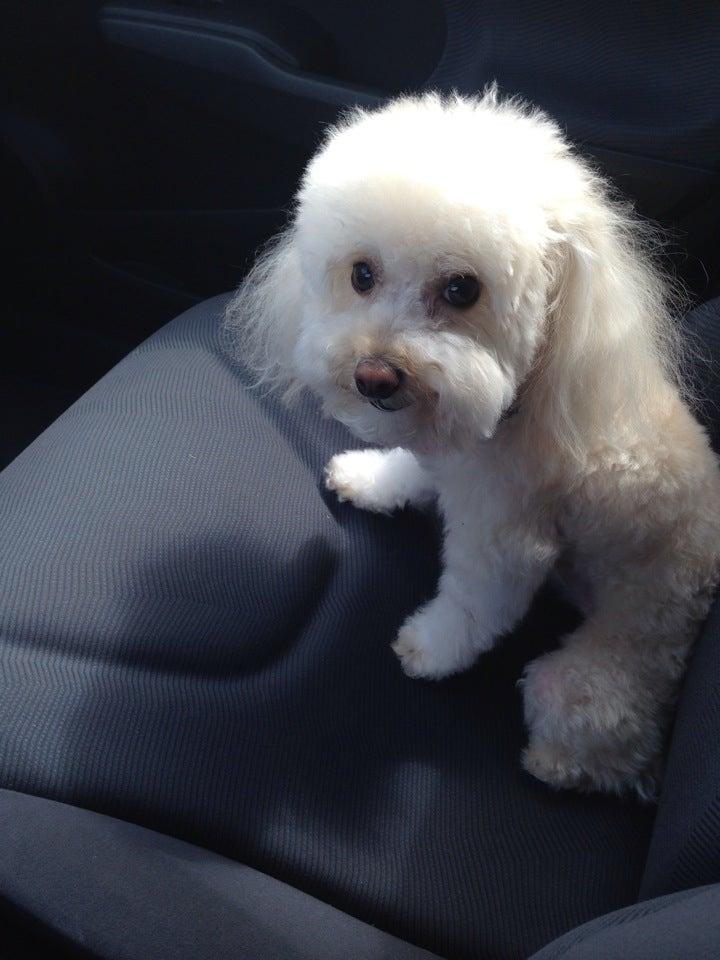Yuppy Puppy,