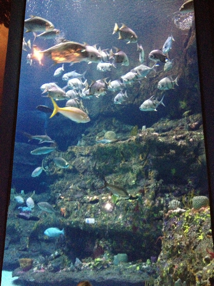 Reviews Of Kid Friendly Attraction Nc Aquarium At Fort Fisher Kure Beach North Carolina Minitime