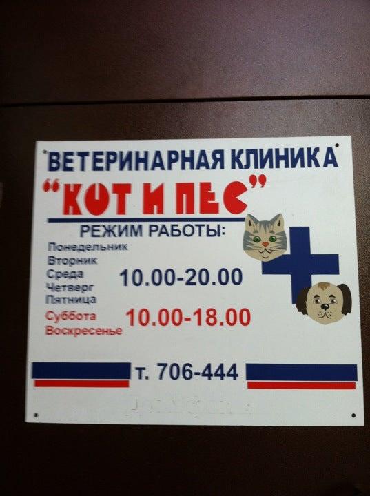 Ветеринарная клиника в тольятти кот и пес