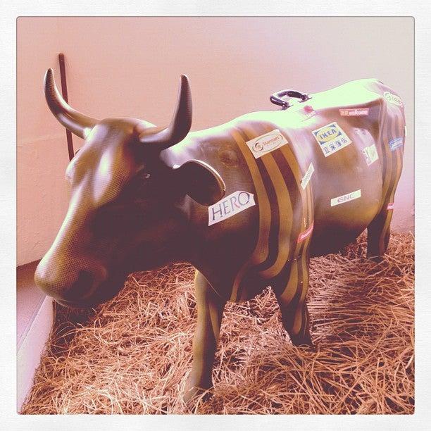 品牌牛牛模型