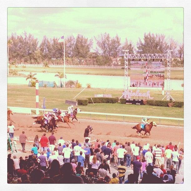 HIALEAH PARK RACE COURSE,bets,betting,flamingos,gambling,historic,horse racing,horses,racing