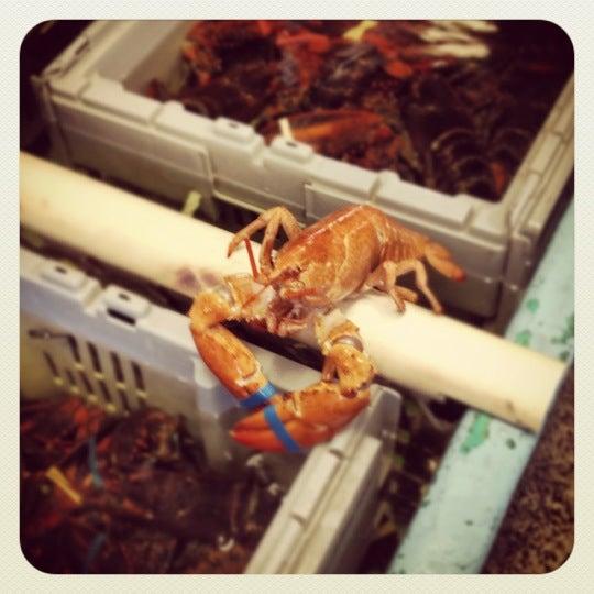 Twin Lobsters,