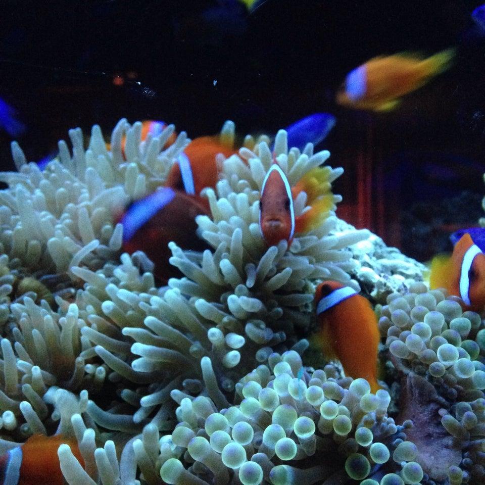 Aquarium Dining Shinjuku LIME (新宿 ライム アクアリウムダイニン)