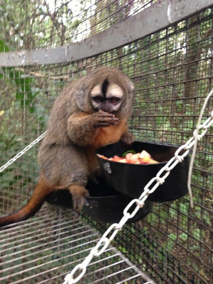 Photo of Monkey Jungle