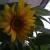 anita-kunnen-18127305