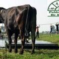 poldersport-de-kwakel-17877109